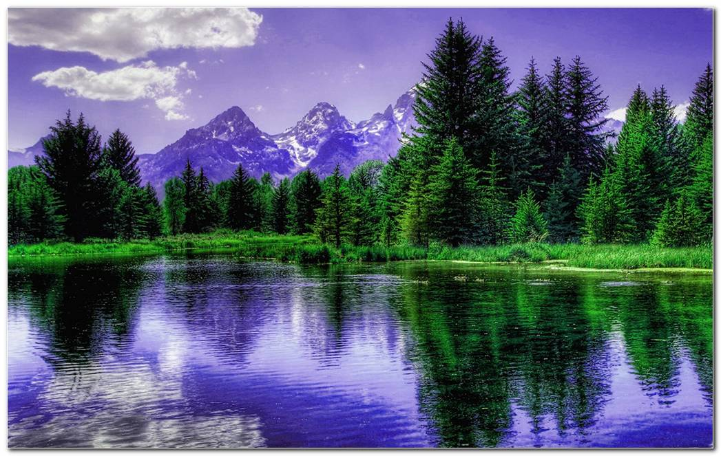 Purple Mountains Behind The Trees Hd Wallpaper