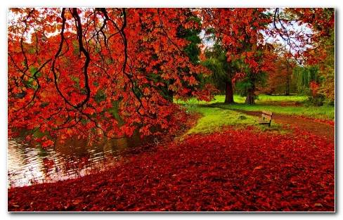 red maple leaves HD wallpaper
