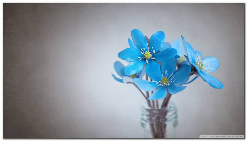 Small Blue Flowers 2 Wallpaper 1920x1080