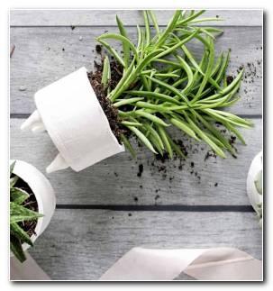 Suculentas Plantas Opciones Originales