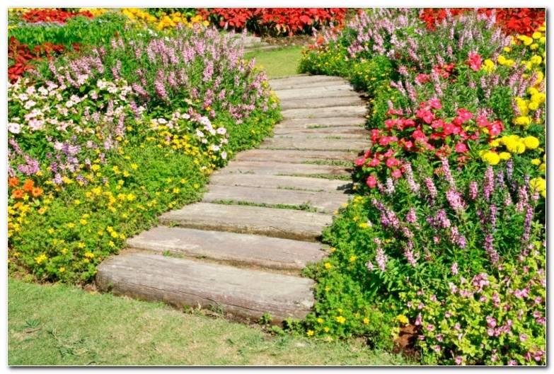 Suelos Senderos Camino Disenos Jardin Flores Frescas Ideas