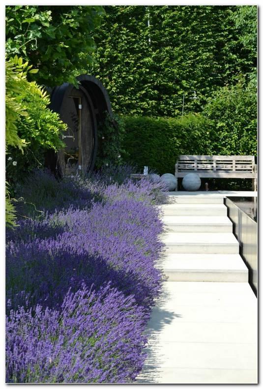 Suelos Senderos Camino Disenos Jardin Lavanda Banco Ideas