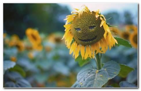 Sun Flower Face