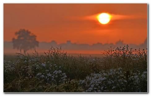 Sunset On The Field Wallpaper