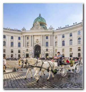 Vienna Vida Ideas Opciones Lista