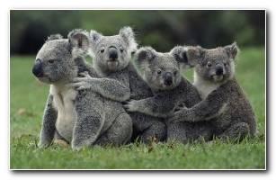 Wildlife Animal Wallpaper