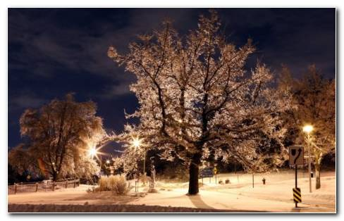 Winter Night In The Park Hd Wallpaper
