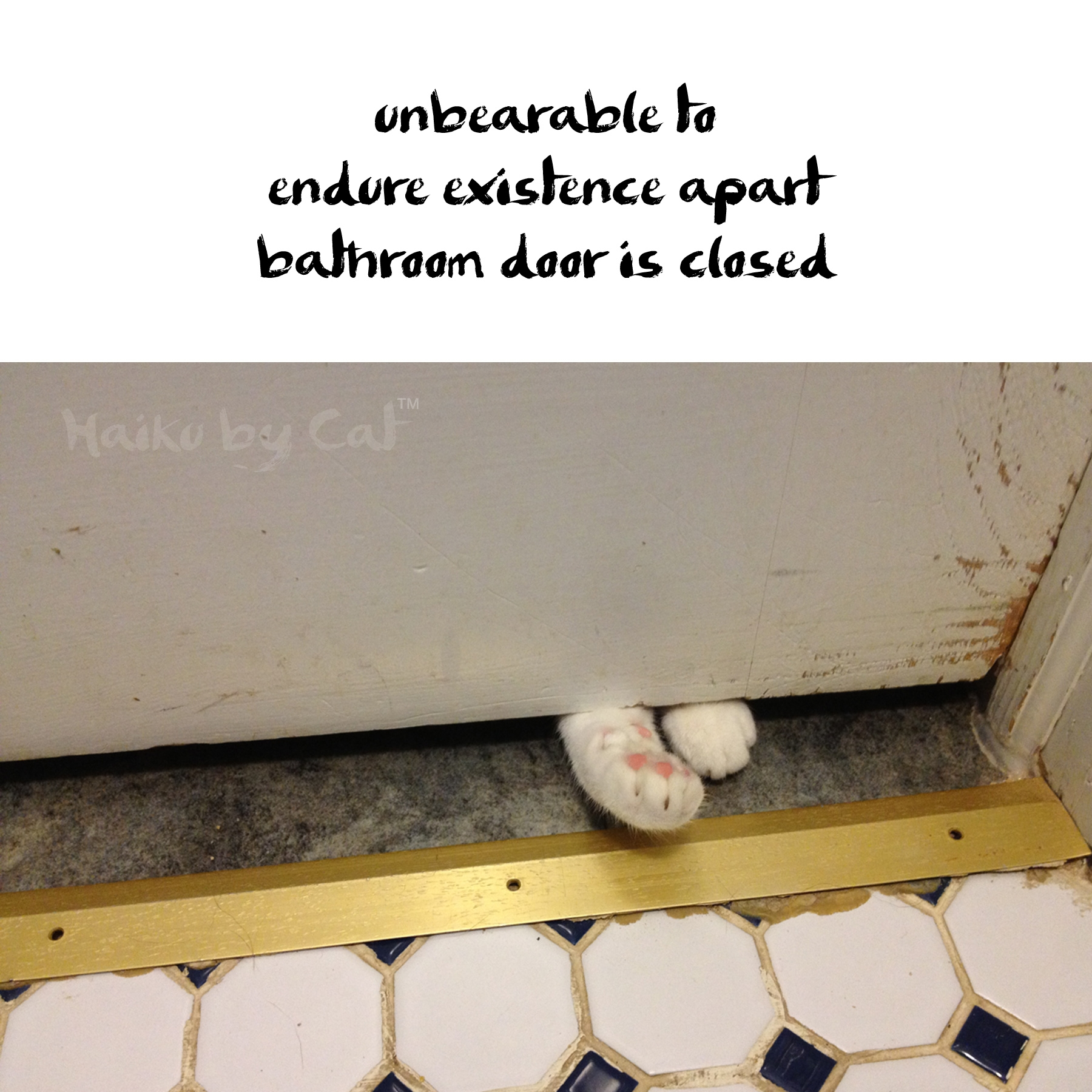 Cat Closed Bathroom Doorhaiku cat unbearable life with dogs and cats
