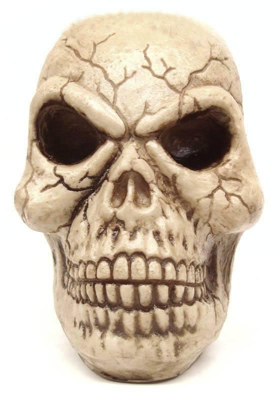 Crânio Caveira Skull Benjamin Decorativo Resina