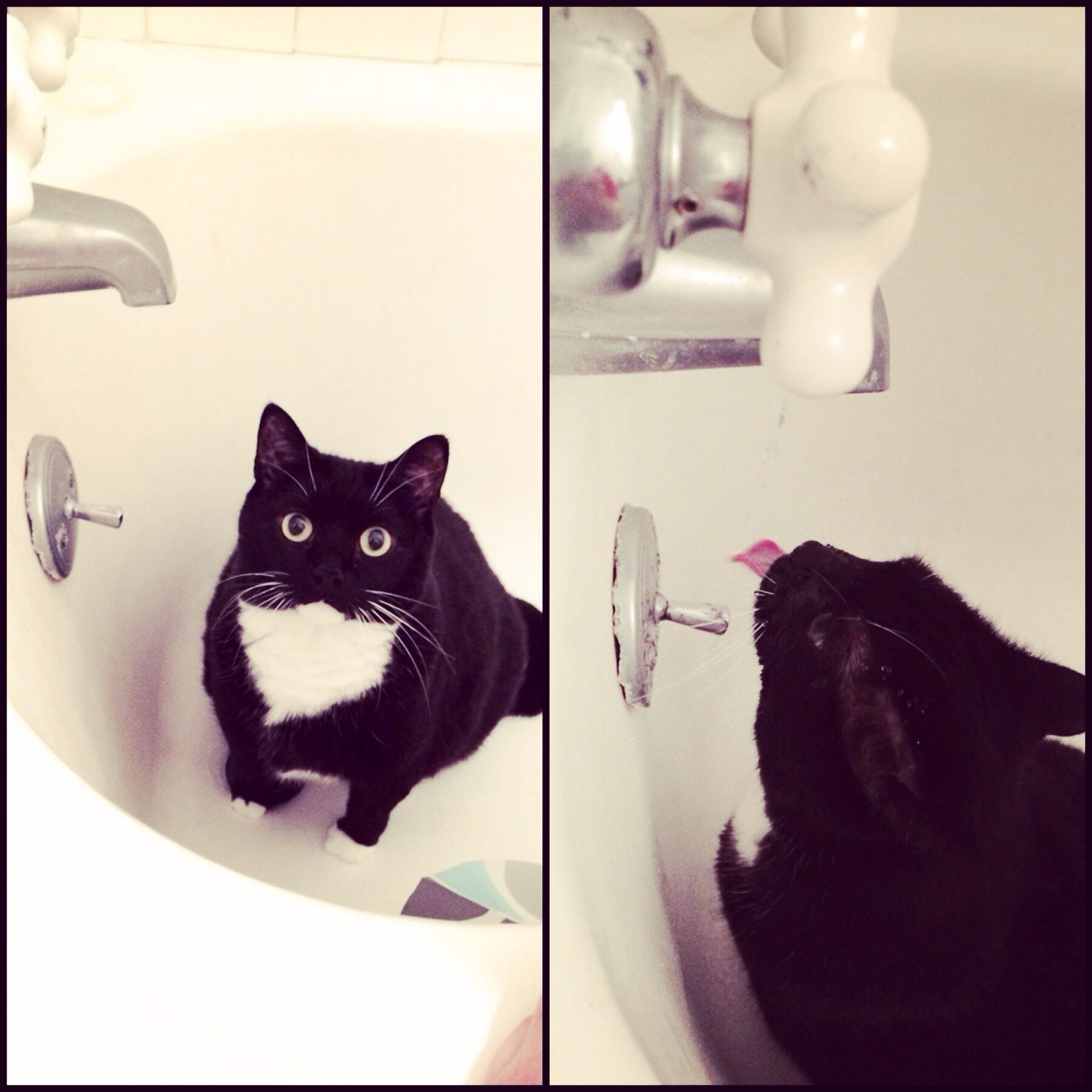 ever since i turned the water on for my girlfriends cat to get a within sizing 1800 x 1800