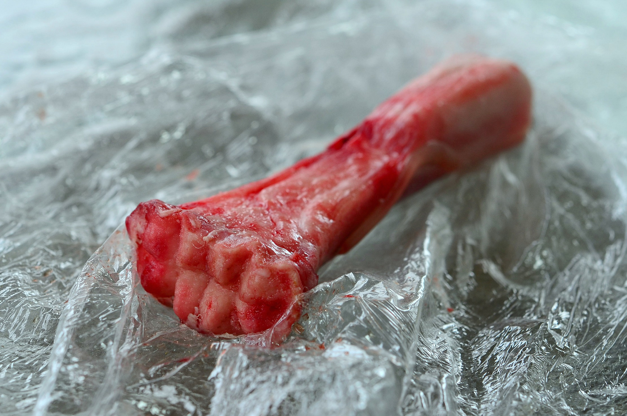 Shank Bone, photo by Flickr user SLGC