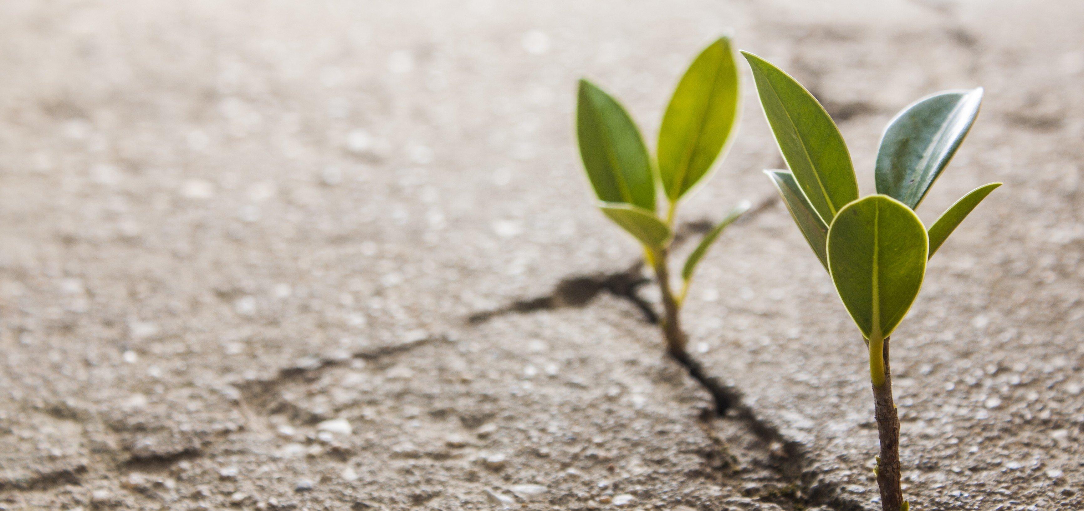 rosh hashanah torahfortheresistance cultivating hope jewschool