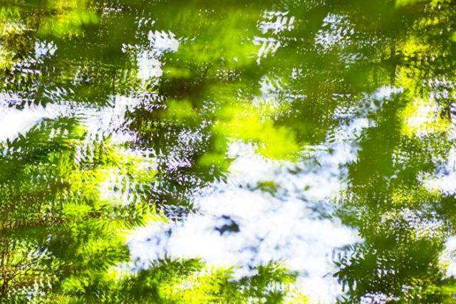 Movimento em verde 06 640x427 landscape Home