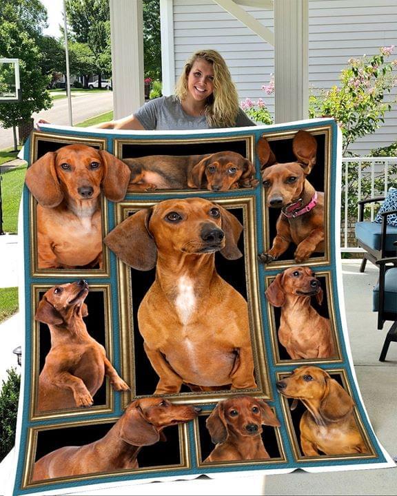 Cute Dachshund Poses For Dog Lover Quilt Blanket quilt blanket