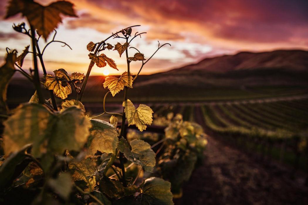 Winery & Wine Bar