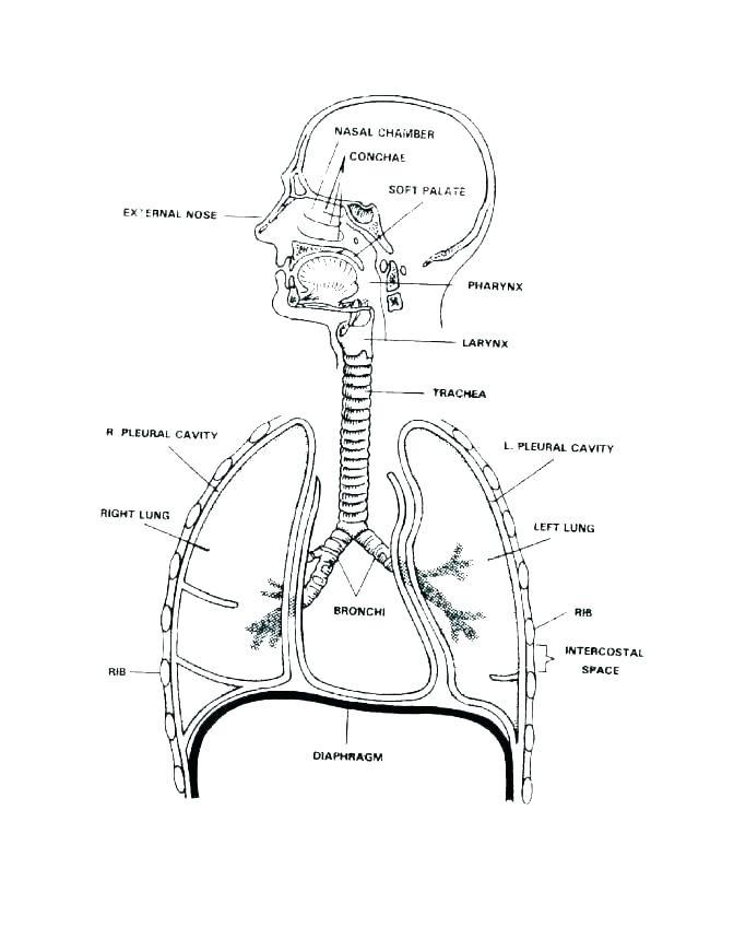 Human Meridians Diagram