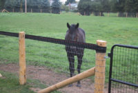 Safe Effective Fencing Options For Horses Horse Journals inside proportions 1200 X 900